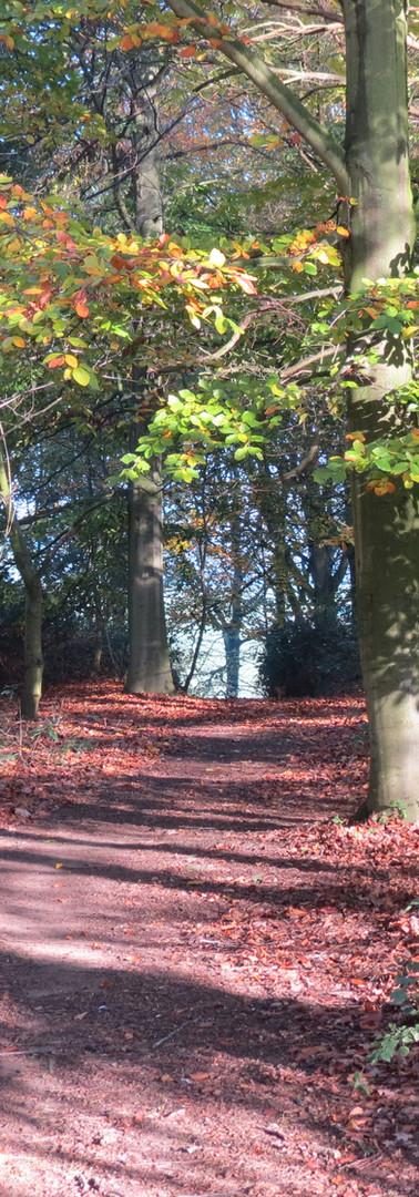 Losh Hill Woods