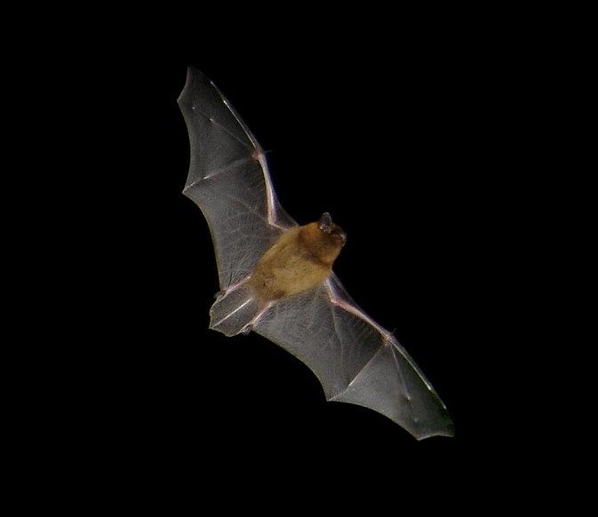 What's that bat? 20th August 2021