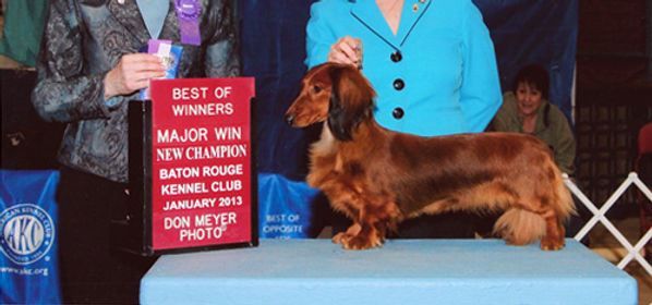 Gunner wins a Group Four at his first show after taking a year and a half off!  Thank you to Judge Avery Gaudin and the Greater Muskegon Kennel Club.