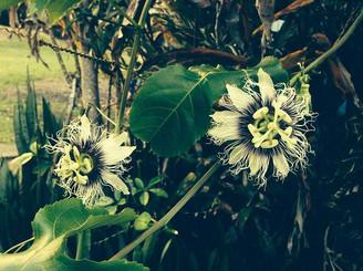 Funky-Flower-3.jpg