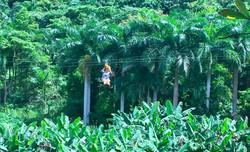 Yunque Ziplining is #1 Tripadvisor !