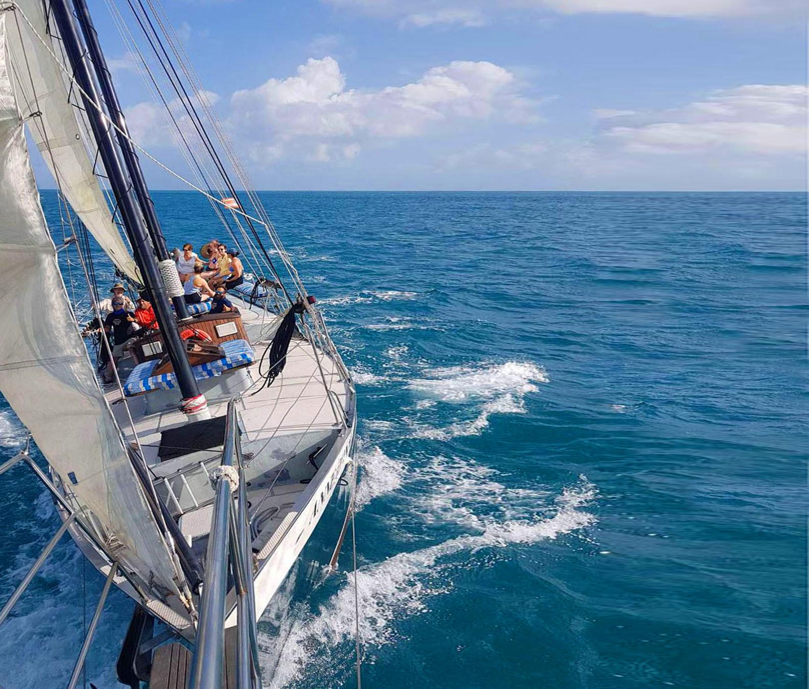 Calico Sailing Fast Ad Solo