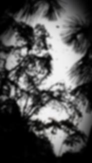 IMG-20190801-WA0001_edited_edited.png