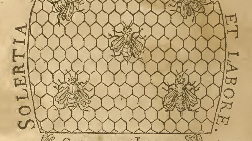 Sound Library Api/Bees/Abeilles