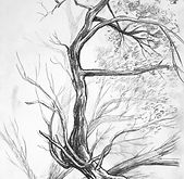 Nature-Pic-Drawing.jpg