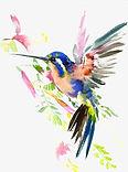 bird watercolor.jpg