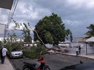 Por tormenta Reporta Protección Civil caída de árboles