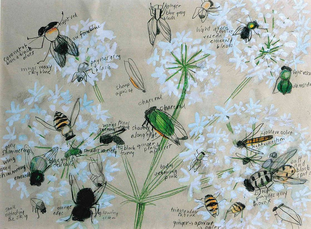 hand drawn images of white flowers with insects and writing