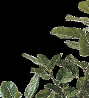 plant26edit_LR.png
