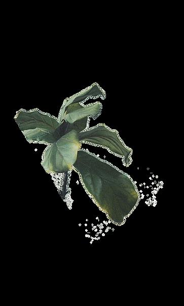 plant3_LR.png