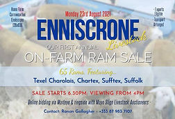 Enniscrone Livestock 23Aug21.jpg