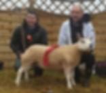 First Shearling Ewe 2019 All Ireland.jpg