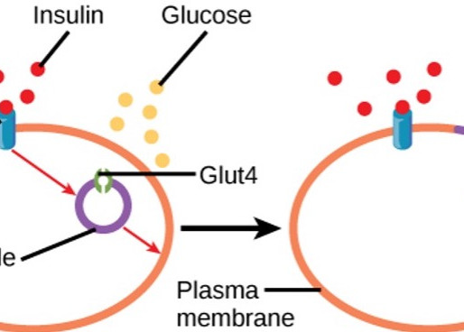 Insulin Resistance - What does it mean?