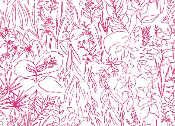 Field Study in pink
