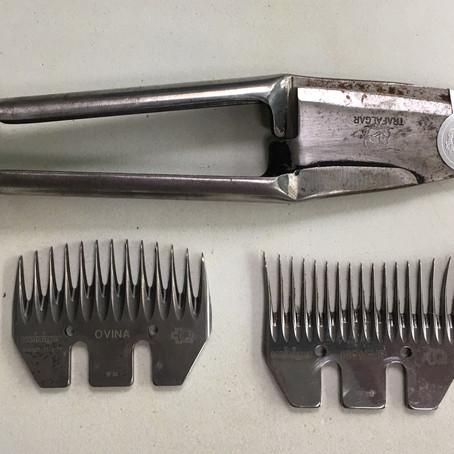 Een agorageit scheren is niet hetzelfde als het scheren van een schaap. (artikel)