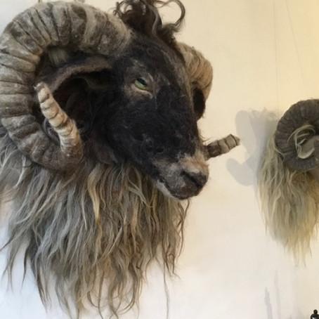 Een kop van een schaap, angorageit of alpaca vilten.