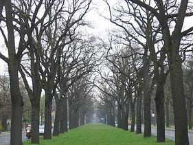 tree management survey