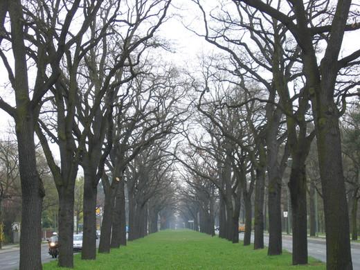 Tree Lane