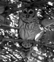 Front View Owl_edited.jpg