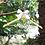 Thumbnail: Bruidsjurk hanger gepersonaliseerd