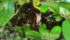 FOLY dans le buisson-3.jpg