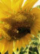 IMG_1149 Kopie.jpg