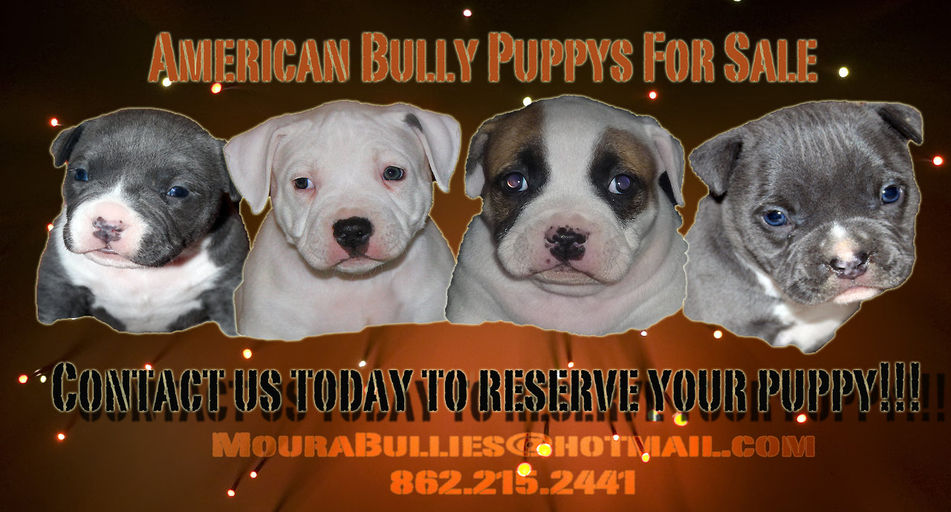 MouraBullies Exotic American Bullie Breeder Newark Nj