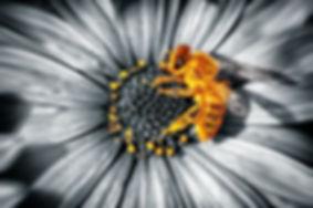 Art of Beekeeping and Healing, www.beabeekahuila.com