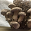 Thumbnail: Shiitake GROW YOUR OWN