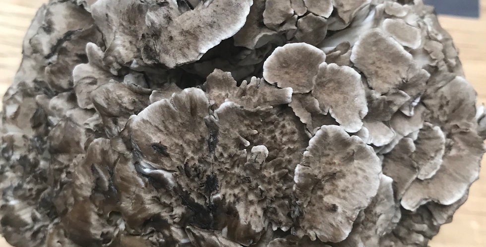 Maitake Fresh Mushrooms 150g