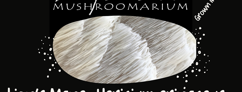 Lion's Mane Dried Mushrooms 20g pouch