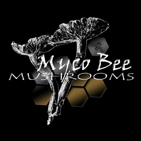 One year already? Mycobee Mushrooms 1st Anniversary at Fenton Barns.