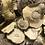 Thumbnail: Shiitake Dried Caps 20g pouch