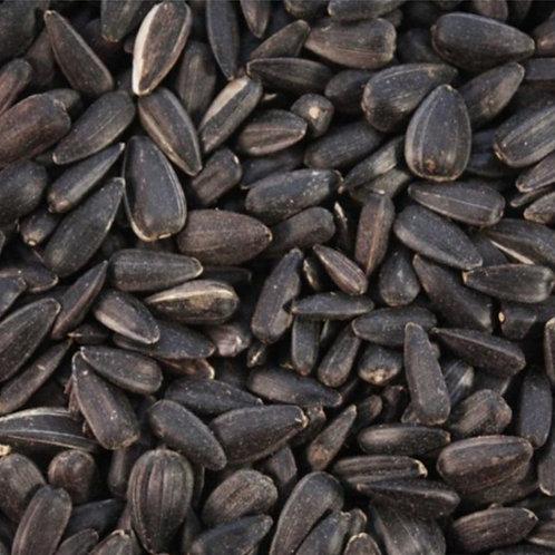Black Sunflower Seeds - LOCAL - UK PRODUCER 20kg