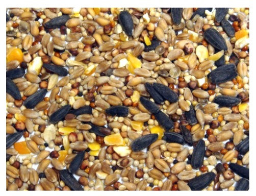 20kg Wild Bird Seed  - Colonels Xtra