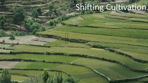 rice terraces in the Himalaya
