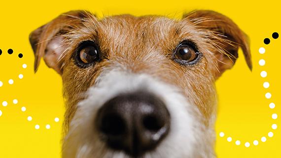 DOGS TRUST thumb
