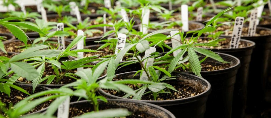 Marijuana Decriminalization In VA Takes Effect 7/1!