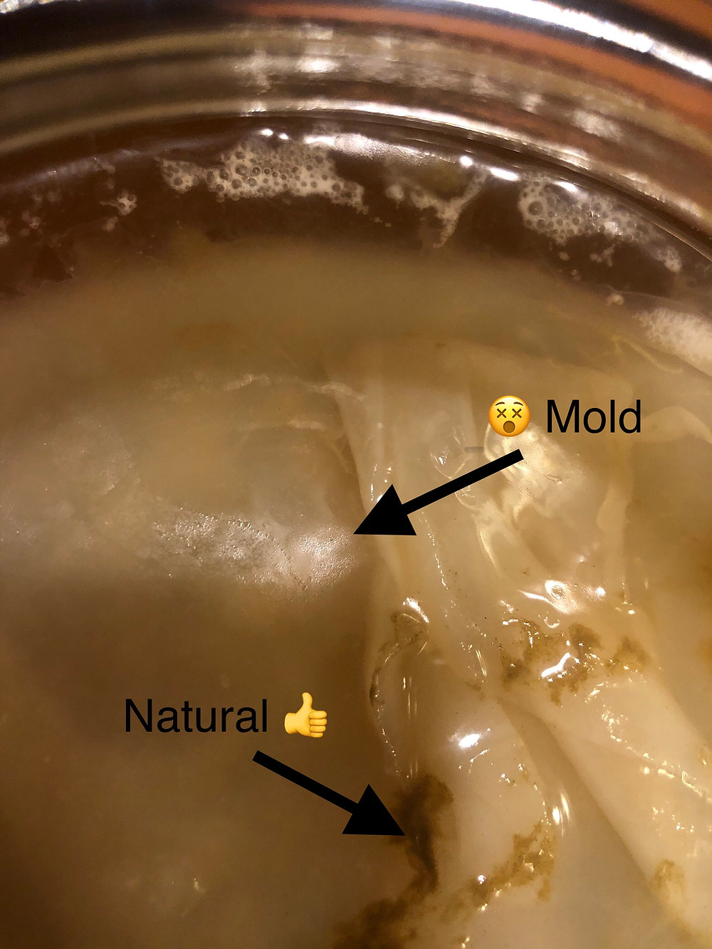 Mold is fuzzy and bad, yeast is slimy and good.