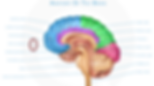 Happy Healthy Homes Eductor Brain