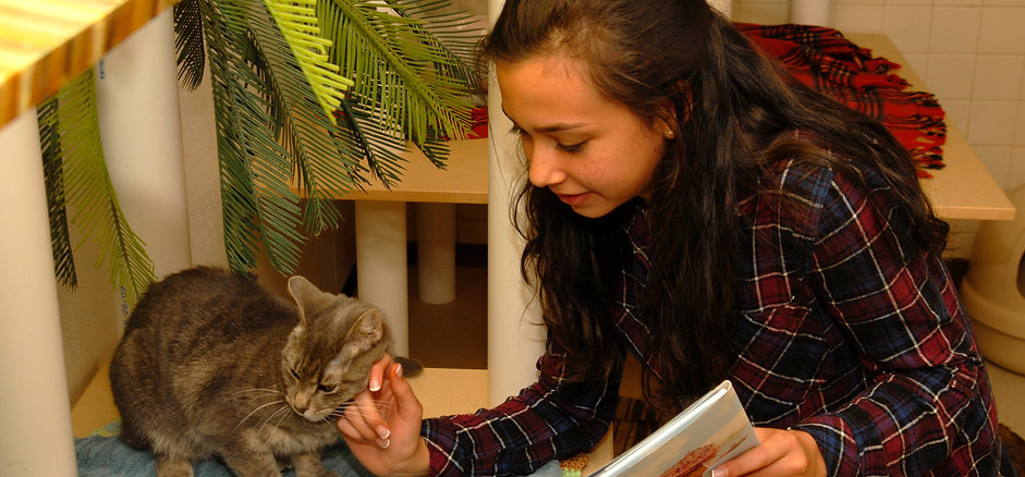 Reading with Cats 2016 003.jpg