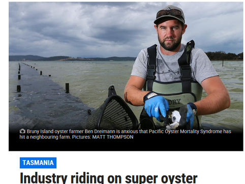 Industry riding on super oyster