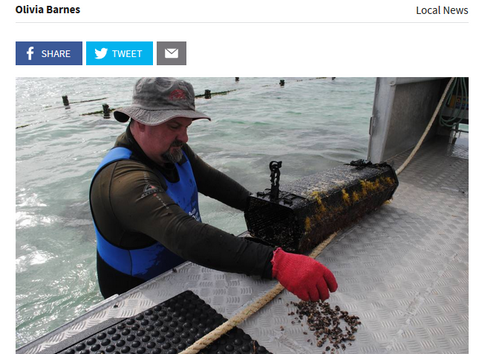 Another step for stronger oysters