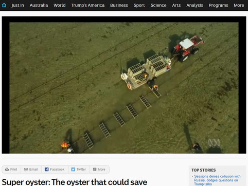 Super oyster: the oyster that could save Tasmania's industry