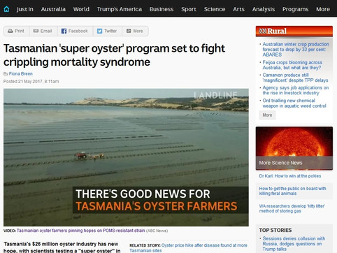 Tasmania 'super oyster' program set to fight crippling mortality syndrome