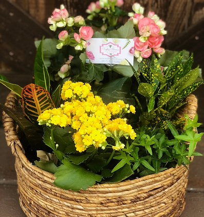 Custom Seasonal Live Plant Basket