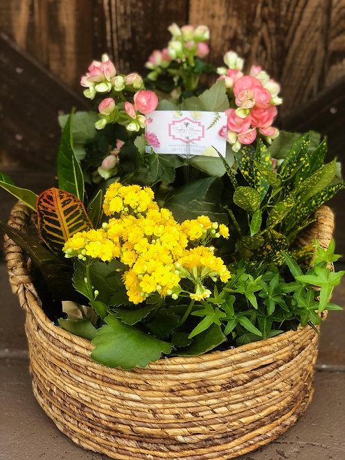 Custom Seasonal Live Plant Basket