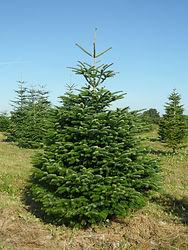 Scierie Brizard - Sapins de Noël