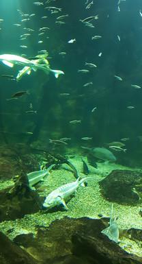 Halak az óriás akváriumban, Ökocentrum, Tisza-tó, Poroszló