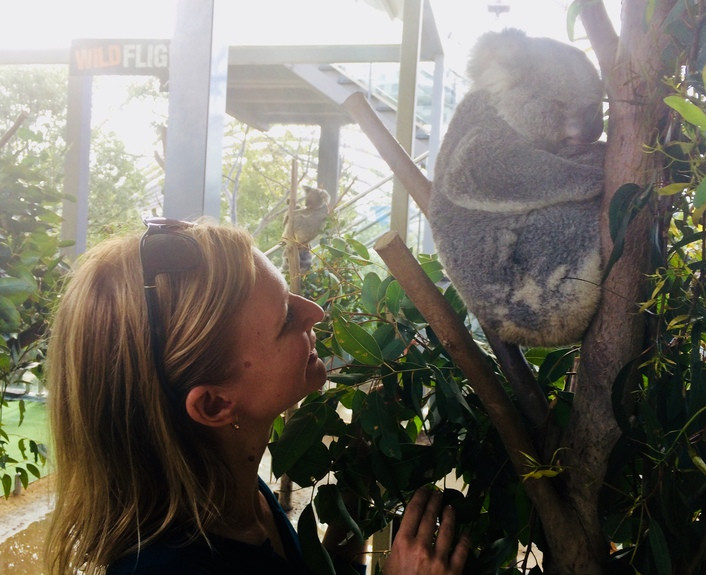 koala maci, sydney, állatkert
